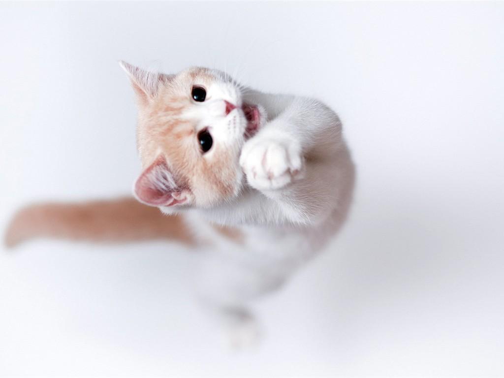 可爱的一车小猫