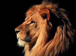 汽车攻城狮