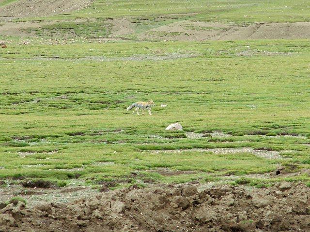 游览扎寺和珠峰  青藏线自驾游记(五) -  - 极速汽车