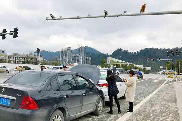 女司机看信号灯上的猴屁股 导致追尾