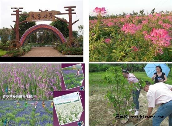花都香草世界图片
