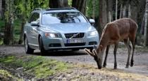 一只麋鹿能影响安全性?奔驰安全性发展史