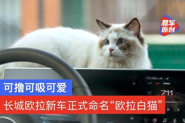 """【易车原创】可撸可吸可爱 长城欧拉新车正式命名""""欧拉白猫"""" 7月中上市"""