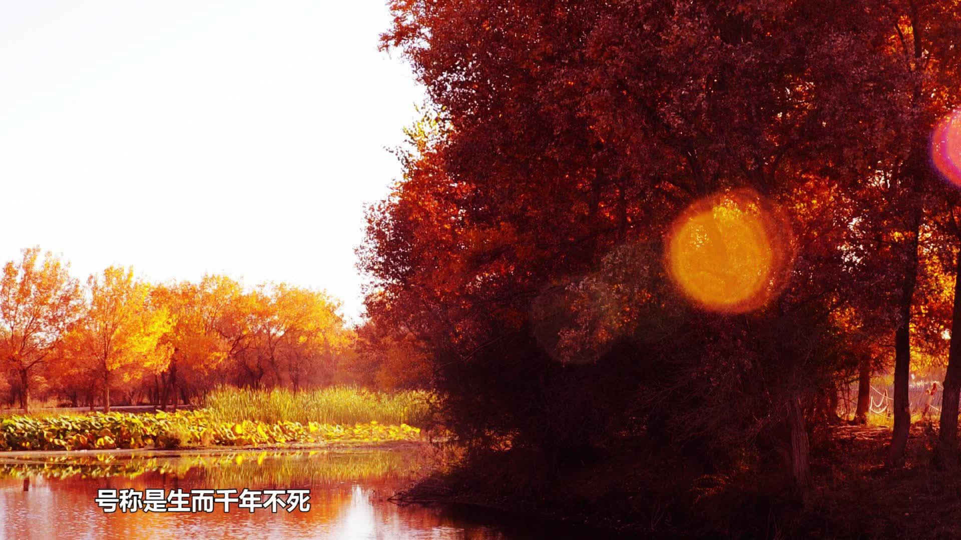 停车减排就能在中国西北种一棵自己的胡杨树
