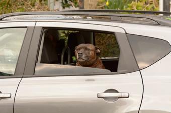为什么有些车后排车窗不能降到底?