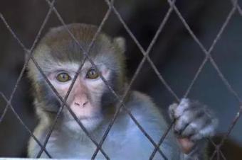 """""""猴子门""""之后,大众再迎召回486万台车大限"""