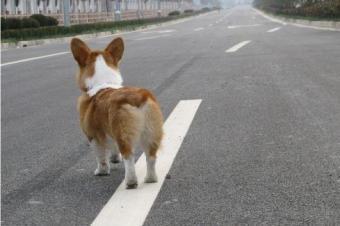 驾车不小心撞到了宠物 难道每次都是车主的全责?