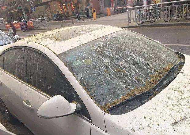 停车时避开这些东西,车漆上的斑点、龟裂都是它们造成的