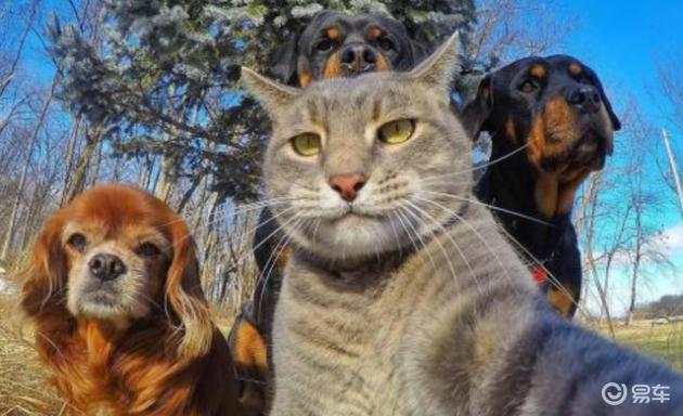"""""""貓和狗""""雙全,長城汽車活變成年青人期盼的模樣"""