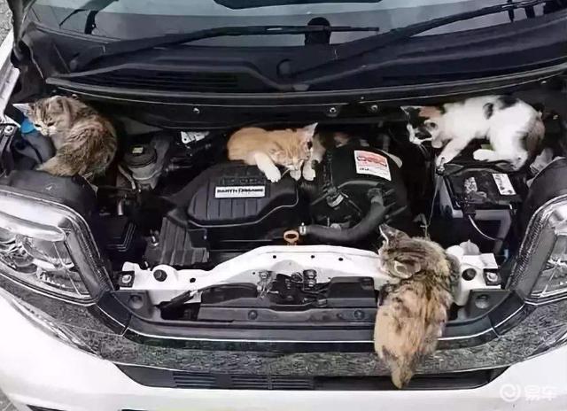 """发动机舱容易变作动物""""安乐窝""""?车主:证明我买的是正品!"""